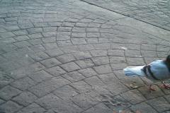 EM-Reviews_Camara_de_Caza_12MP_HD_para_Vigilancia_5210A_BESTOK6354